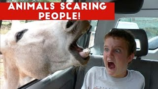 Image of: Memes Funniest Animals Scaring People Reactions Of 2016 Weekly Compilation Funny Pet Videos 123rfcom Try Not To Laugh Or Grin life Awesome Top View Funny Kids Fails
