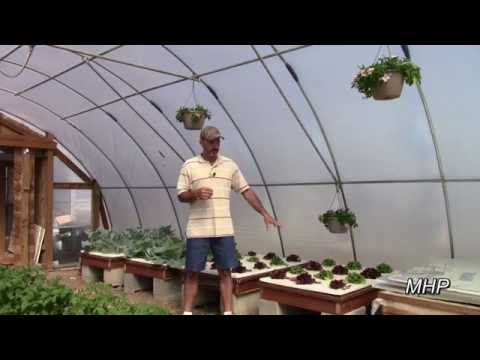 Failed Again – Organic Hydroponic Fertilizer Experiment