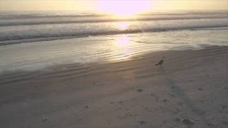 Neptune Beach (FL) United States  city pictures gallery : Atlantic Sunrise, Neptune Beach Florida, Red 4K footage