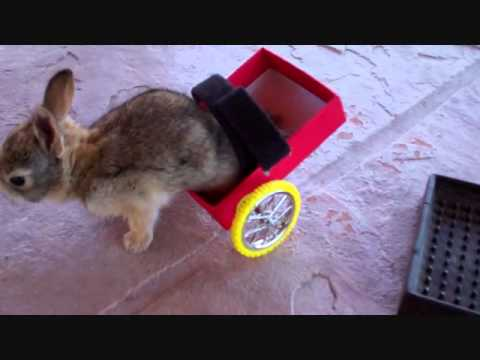 bunny - 