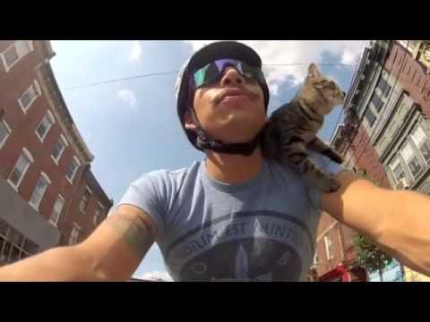 il gatto in bicicletta