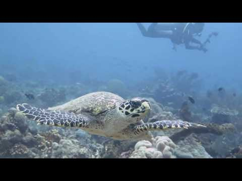 Hiri Island With Dodoku Dive Center dan Familydiver<br>Author : Hiri Island With Dodoku Dive Center dan Familydiver