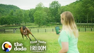 Starving Horse Becomes So Gorgeous And HAPPY  | The Dodo First Taste Of Freedom by The Dodo