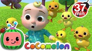 Video Five Little Ducks 2   +More Nursery Rhymes & Kids Songs - Cocomelon (ABCkidTV) MP3, 3GP, MP4, WEBM, AVI, FLV September 2018