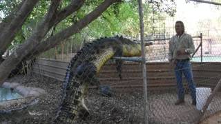 Video Malcolm Douglas Crocodile Park, Broome, Western Australia MP3, 3GP, MP4, WEBM, AVI, FLV Maret 2019