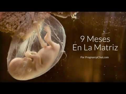 9 Meses en la matriz: Una mirada más notable al desarrollo del feto
