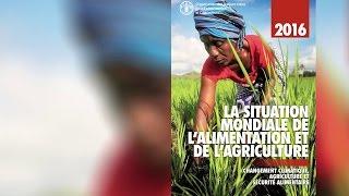 La Situation mondiale de l'alimentation et de l'agriculture 2016 (SOFA)