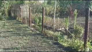 Борьба с сорняками вдоль забора из сетки-рабицы. Стеклоизол
