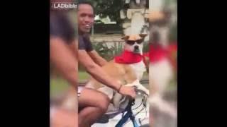 Cachorro de bicicleta e oculos escuros passeando com o dono.Curtindo todo malandro.