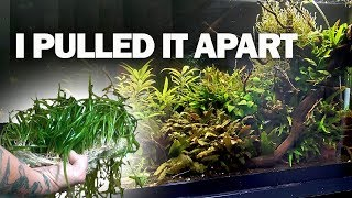 They were the WRONG plants!!! And a goldfish update by Rachel O'Leary