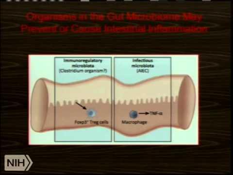 Demystifying Medicine 2014 - The Intestinal Microbiome