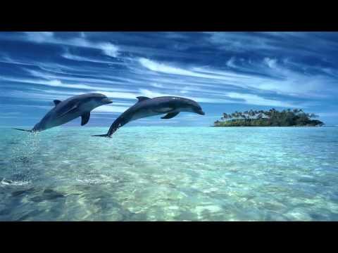 Relaxačná hudba s delfínmi pre pokojný spánok