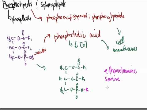 Lipids 9:  Phospholipids