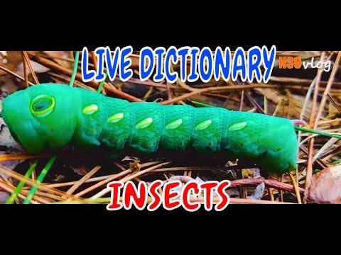 Clip ngắn đẹp về côn trùng