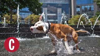 Pets Who Beat the Summer Heat | Cosmopolitan by Cosmopolitan
