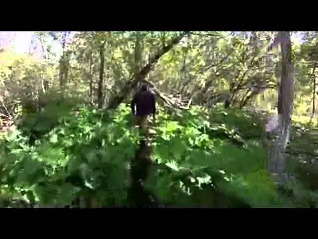 Color bear retrieve spring 2013