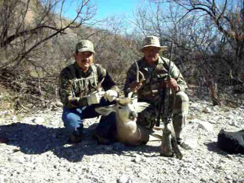 venado de chihuahua bura