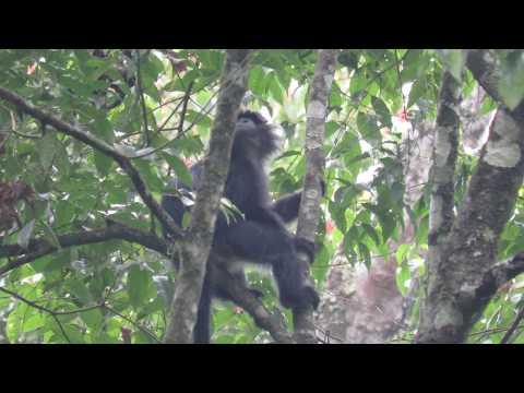 Pelepasliaran Rusa Timor Di Taman Hutan Raya R. Soerjo
