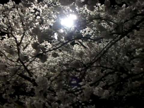 内野小花見【2010.4.18】