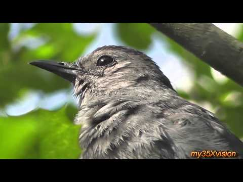 yt:stretch=16:9 - Squirrels Love Rainbows Electrical Poles and Catbirds in HD Music by French Collective @t jamendo.com This was filmed on 5/29 2011 by my35Xvision during Memo...
