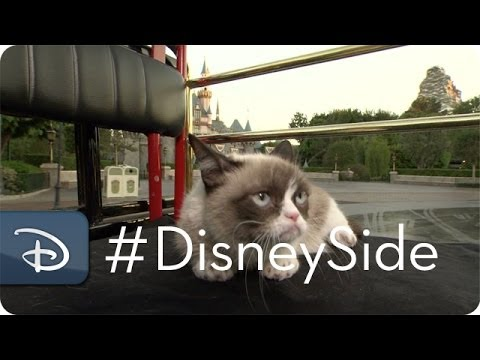 Grumpy Cat Finds Her Disney Side %7C Grumpy %26 Grumpy Cat %7C Disney Parks