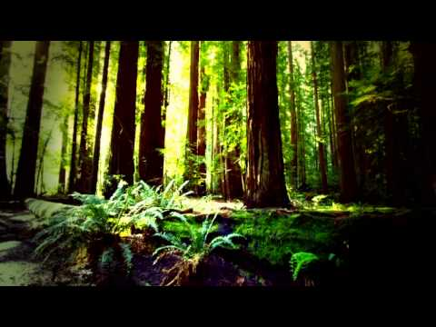 Traveller - Forest Journey