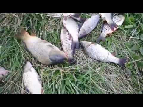 рыбалка на карпа в брянском районе