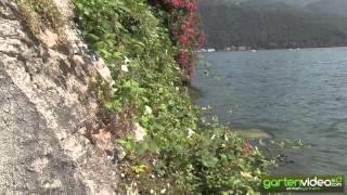 #1287 Brombeere Theodore Reimers als Wasserpflanze