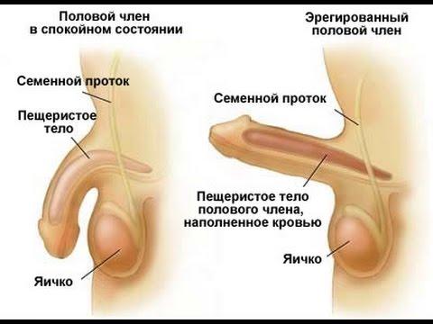 medikamenti-stimuliruyushie-seksualnie-refleksi