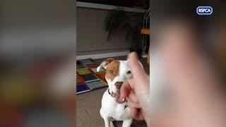 耳が聞こえないために5回も捨てられた子犬は、新たな家庭で「才能」を開花させた!