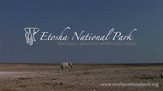 Etosha Namibia  City new picture : Etosha National Park - Namibia