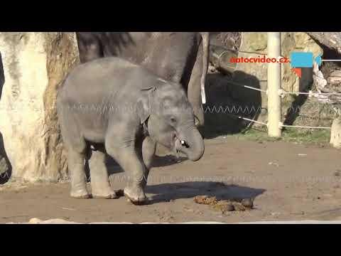 Sloní stádo