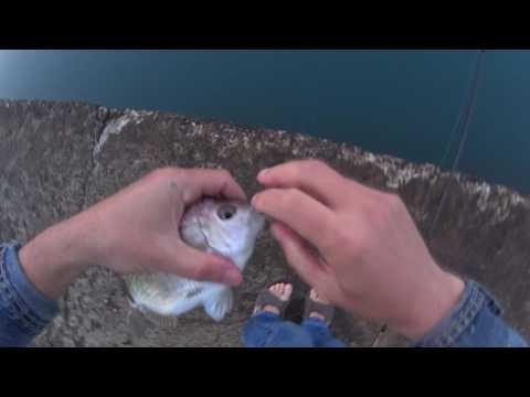 рыбалка в лазаревском с берега видео