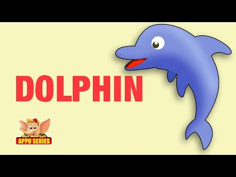 Animal Facts - Dolphin