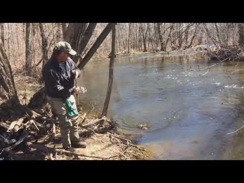 Brantford Bassassins - Whitemans Creek Trout Opener Clip