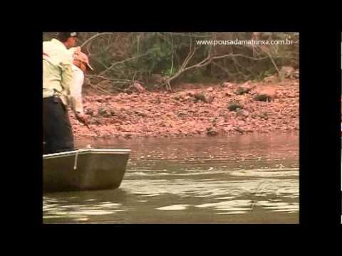 Grande Cachorra da Amazônia na Pousada Matrinxã