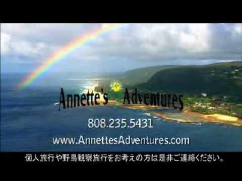 AnnettesAdventures – Oahu Birding Tours