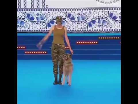 un pastore tedesco addestrato più di un soldato. sbalorditivo!