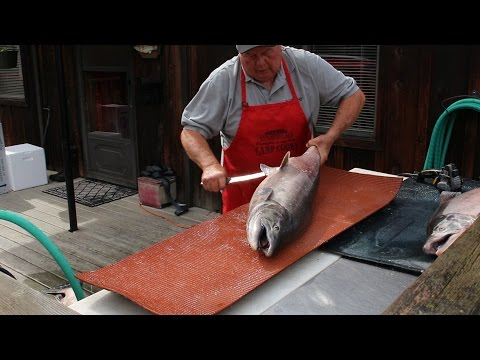 How to Fillet a Big Salmon and Prepare it for Smoked Salmon Recipe