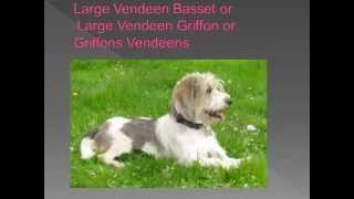 Dog breed name cross reference part 8-L