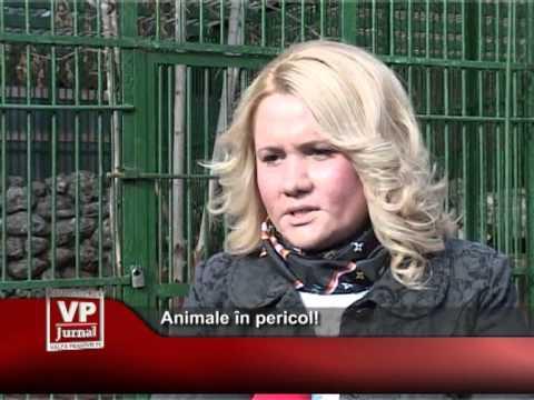 Animale în pericol!