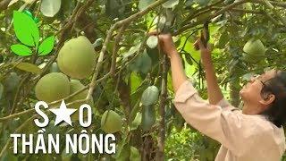 Trồng cây thanh trà: Triệu phú đi lên từ nghèo khó