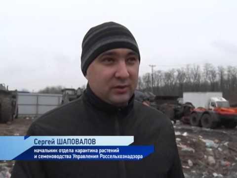 Уничтожение в Ростовской области партии польских грибов запрещенных к ввозу в Российскую Федерацию.