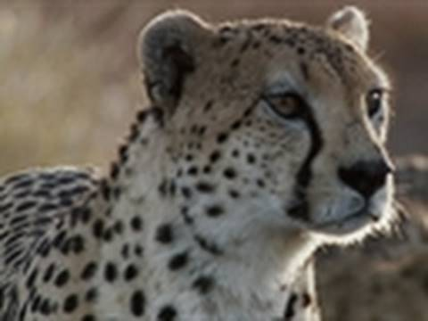With visuals showing tiny details of the animal world, the Discovery series Life gets up close and personal with nature. From leaping cheetahs to hunting dolphins, watch spectacular videos.