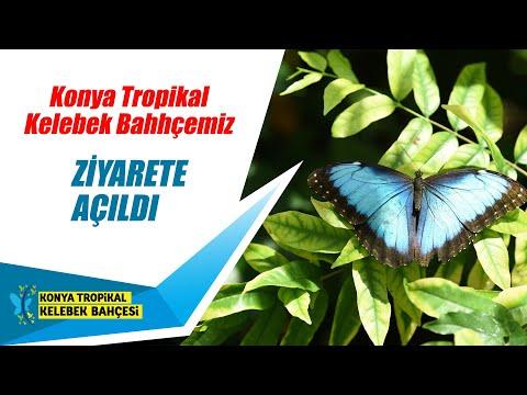Tropikal Kelebek Bahçemiz Yeniden Ziyarete Açıldı