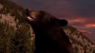 Bears - Hibernation
