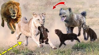 Video The Power Of King Lion! 4 Lions destroy mother and Hyena cubs within 1 second MP3, 3GP, MP4, WEBM, AVI, FLV Desember 2018
