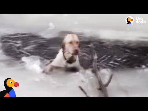Koira parka tipahti jäihin – Pelastajat taistelevat aikaa vastaan