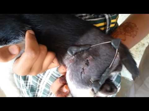 Cat Femur frac Int & Ext MP4