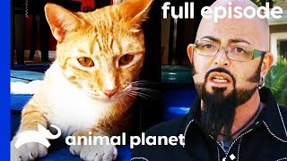 This Kitty Keeps Attacking His Owners! | My Cat From Hell (Full Episode) by Animal Planet